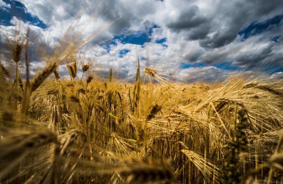 v polích a nebi